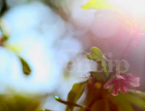 Allama Iqbal poetry video- Upbeat